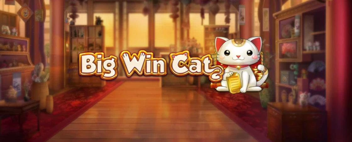 ny slot big win cat