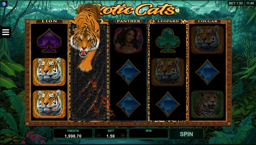 Exotic-Cats-Online-Slot-Tiger-Reel
